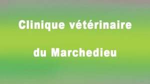 clinique-veterinaire-marchedieu